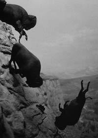 Untitled, Falling buffalo, David Wojnarowicz, 1988-89.